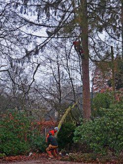 Für die Fällung oder Beschneidung von Bäumen, wo der Einsatz eines Hubwagens aus Platzgründen nicht möglich ist. Bei diesem Einsatz wird jeder Ast einzeln abgeseilt.