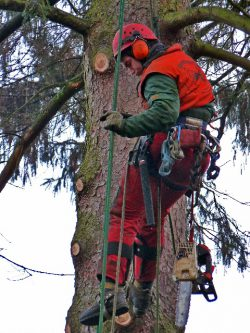Seil- und Klettertechnik